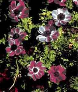 Комнатные растения ароматические