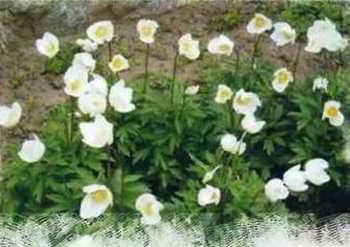 цветут в апреле