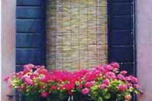 Украсим балкон цветами, балконные и контейнерные цветы и растения