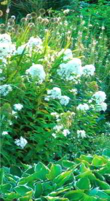 цветник, выдержанный исключительно в белом цвете