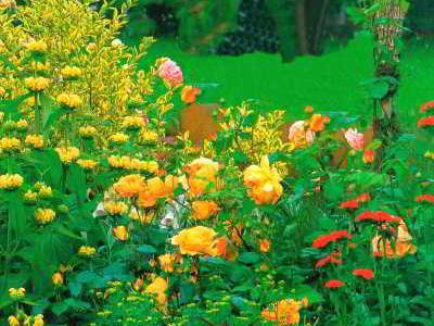 Цветовая гамма сада