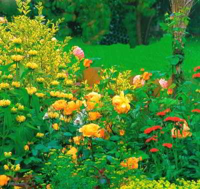 Сочные летние краски смешанного цветника