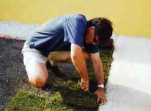Чтобы газон лучше смотрелся