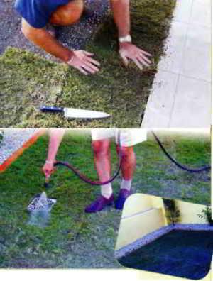 Сразу после укладки обильно полейте газон