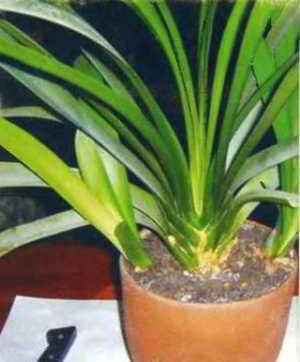 пересадка горшечных растений