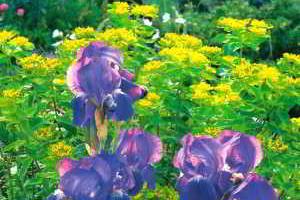 Оформление сада подбор и комбинация растений