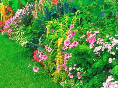Однолетние растения в цветнике