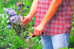 Уход за цветником