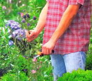 Удаление увядших соцветий