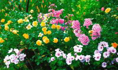 Роскошные цветники и клумбы из роз