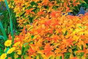 Советы по выбору растений миксбордеры