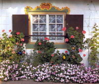 Рекомендации по покупке растений для балкона