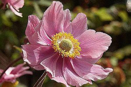 Как укрыть на зиму луковичные цветы (лилии, тюльпаны, нарциссы)
