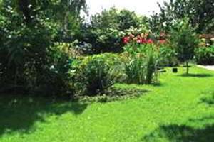 Газон своими руками, подготовка почвы для газона