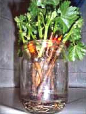 Рецепт сосиски в кляре в домашних условиях
