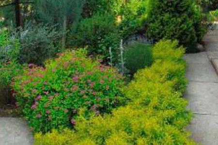 Золотистый сад, растения с желтыми листьями