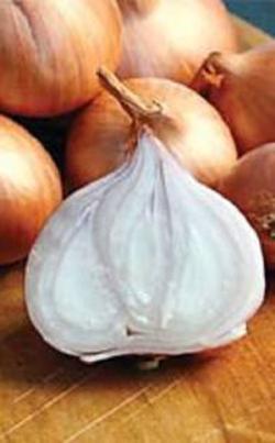 Лук шалот выращивание из семян