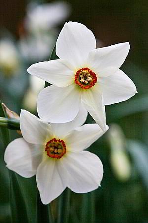 Цветы с приятным запахом