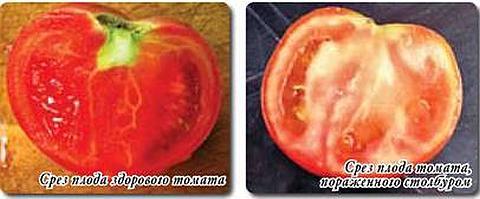 Столбур томатов, фитоплазмоз