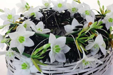 Эухарис лучше цветет в горшках 25 см, посаженный по 5-6 луковиц