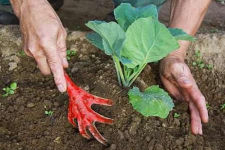 Окучивание огородных растений, для чего нужно