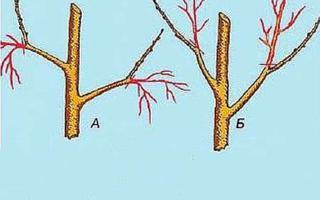 Весенняя обрезка в саду, когда и как обрезать деревья и кустарники
