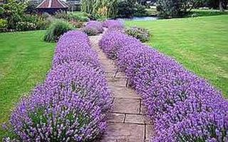 Ароматный сад