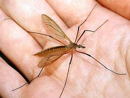 Борьба с комарами, народные средства
