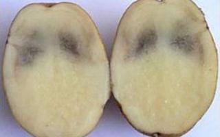Картофель чернеет внутри — почему темнеет картошка при хранении