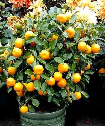 на фото апельсин