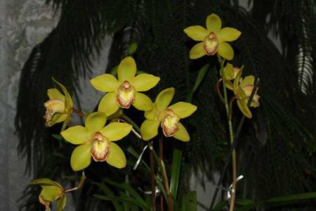 Орхидея для цветения нуждается в низкой температуре
