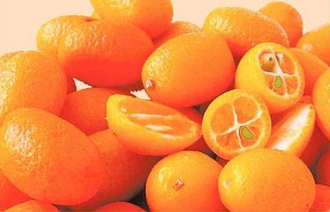 Зрелые плоды каламондина