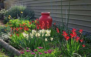 Виды и названия многолетних луковичных цветов для сада
