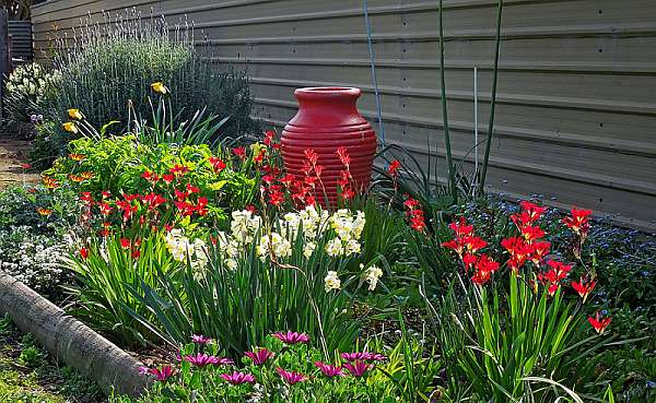 Луковичные цветы подходят для создания ранневесенних, летних и даже осенних композиций